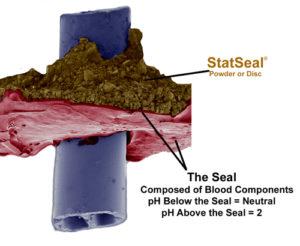 Seal-Microbe-Web